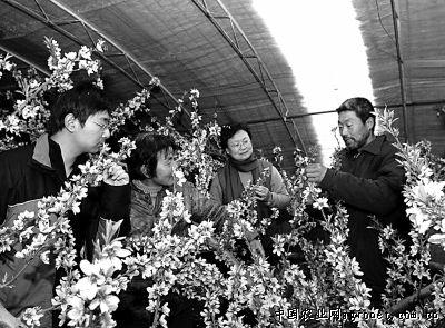 河北乐亭农民:科技管大棚 开心