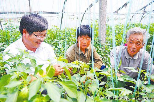 对菜农进行技术指导(图)    9月5日,在濮阳开发区王助镇蔬菜大棚,濮阳