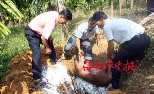 上海市新中畜牧防疫站着力抓好畜牧防疫工作(图)