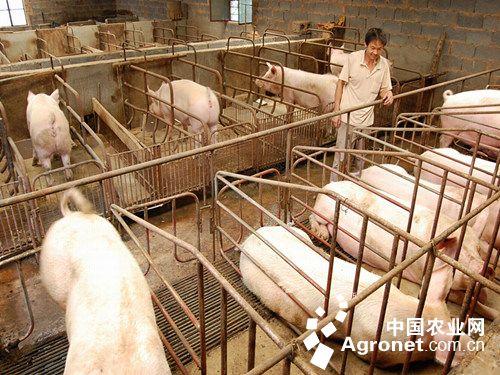 """黑龙江齐齐哈尔克山县畜牧兽医局通过""""三化""""促进畜牧业平稳发展(图)"""