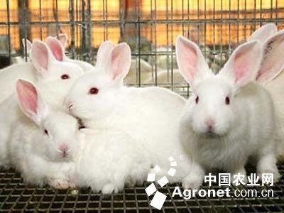 """成了名副其实的""""兔子王""""   面对20只活泼可爱的小兔子,江世同百般"""