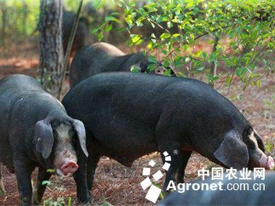 广元苍溪县畜牧业成富民产业(图)