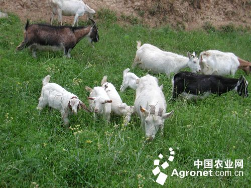 生态畜牧业