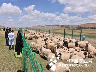 澳洲幸运10 十三五畜牧业发展规划_学习总结_总结/