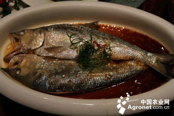 长江三鲜鱼 鱼中的天价鱼