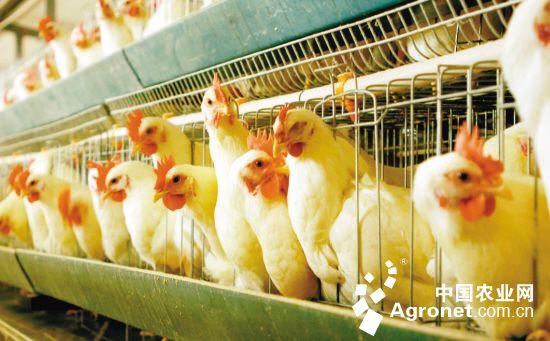 海南定安发展适度规模养殖 畜牧业年产值逾17亿元