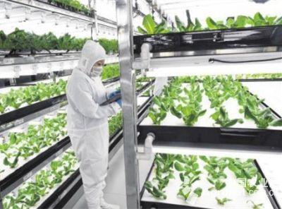 """张家口:蔬菜种植用上""""高科技""""(图)"""