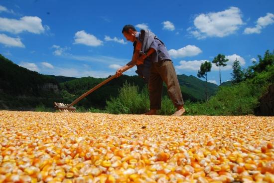 稳住粮食生产和农民增收