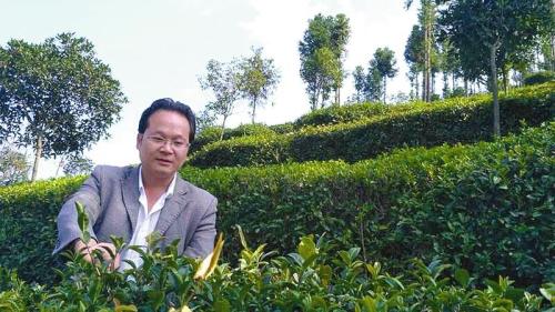 翁江春在本身的茶园里