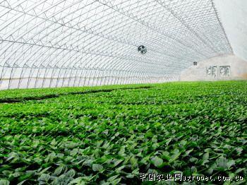 莘县泰国:绿色生态糕点点亮现代农业(图)sas山东科技图片