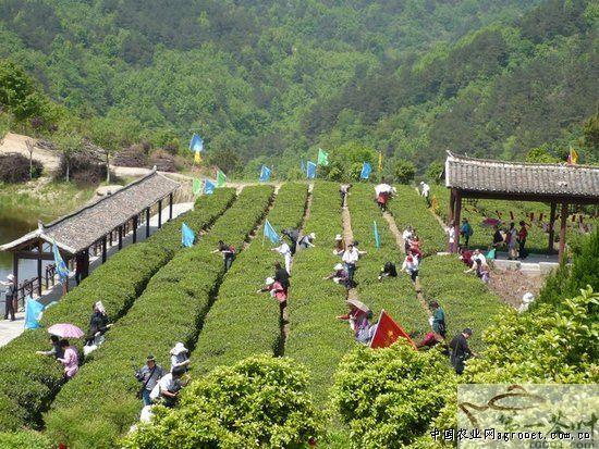 武汉木兰清凉寨茶文化节开幕(图)