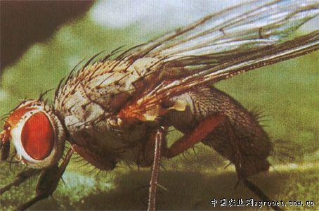 纹蝇诱减器电路图