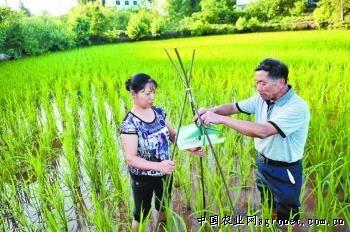 四川南充市推广水稻害虫绿色防控技术(图)