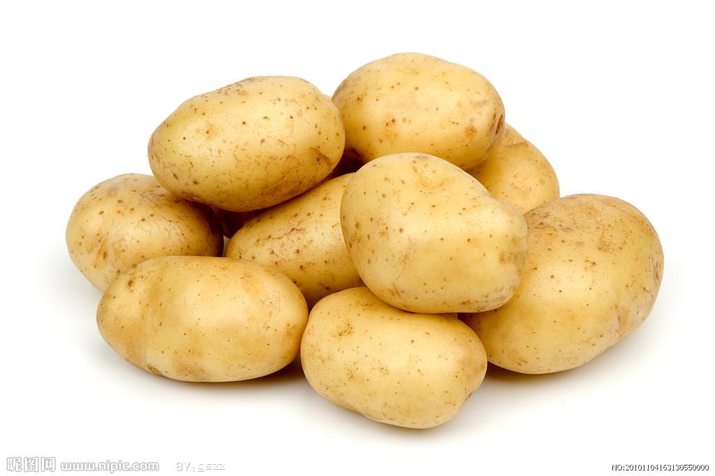 荷兰十五—马铃薯种子