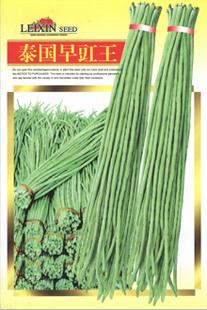 泰国早豇王—豇豆种子