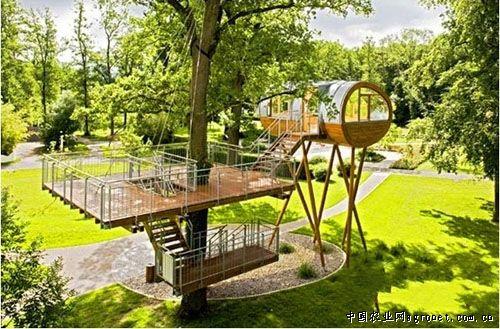 树上的小木屋(图)