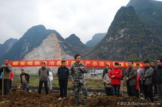 广西都安县举办甘蔗高产示范种植现场会(图)
