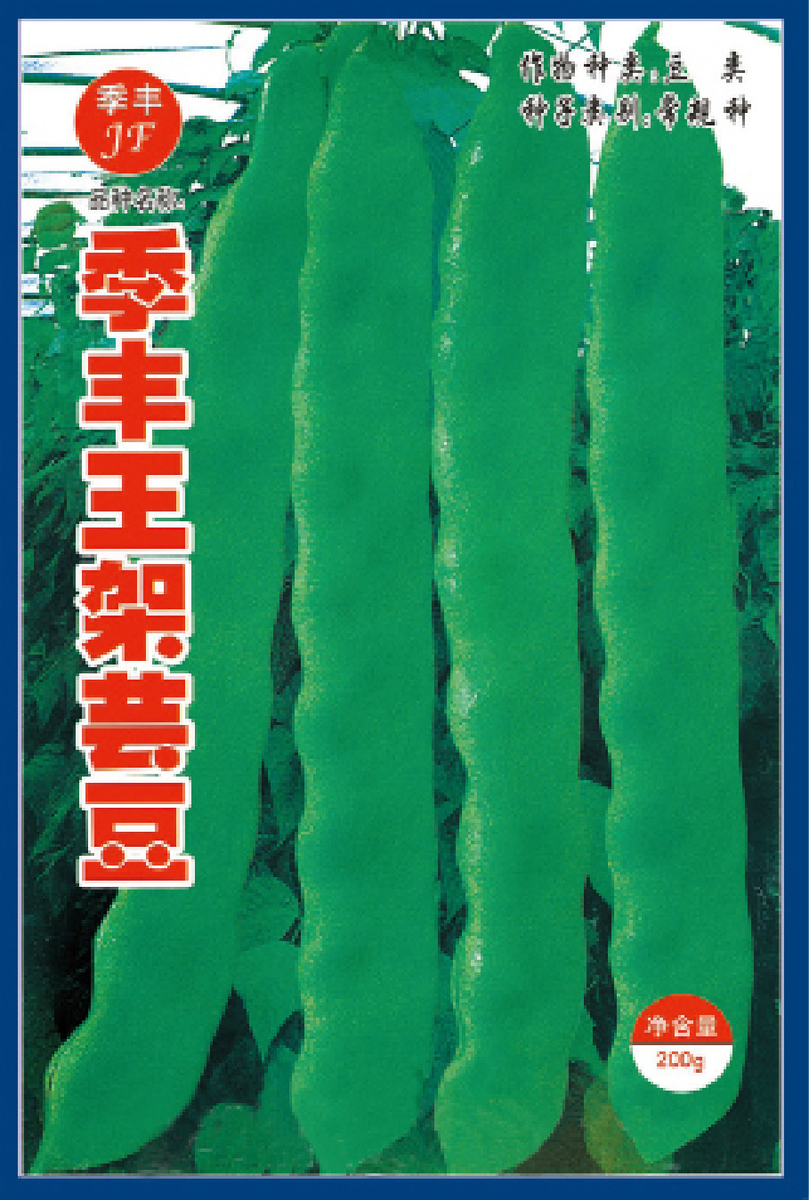 季丰王架芸豆—菜豆种子