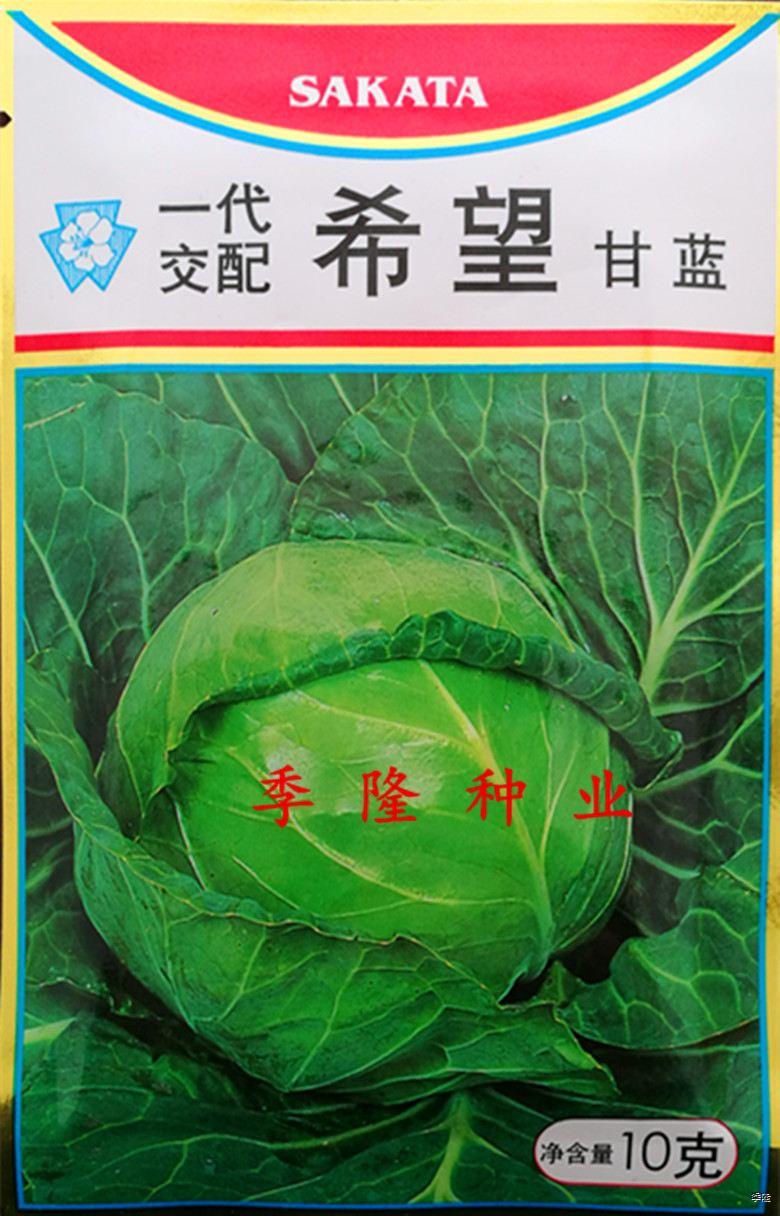 坂田希望甘藍種子