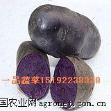 脱毒紫土豆