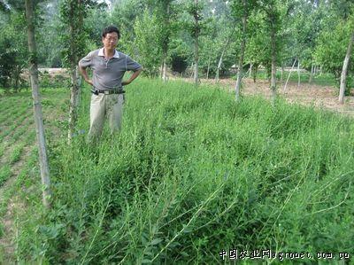 陕西:2017年森林覆盖率达到45%