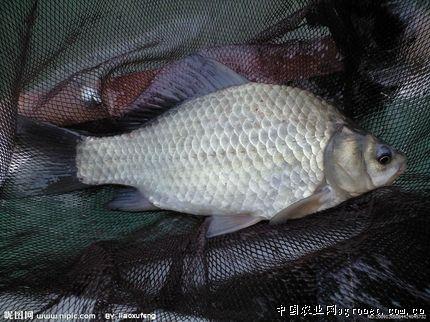http://www.edaojz.cn/jiaoyuwenhua/143220.html