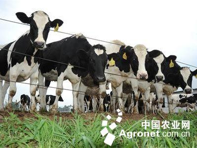 多措施促现代畜牧业提质增效(图)