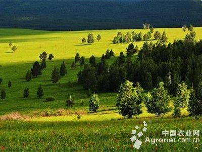 内蒙古施行森林草原防火新条例(图)