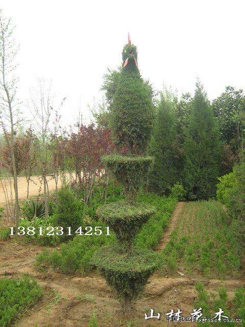 动物造型风景树 – 江苏沭阳县山林园林绿化苗木中心