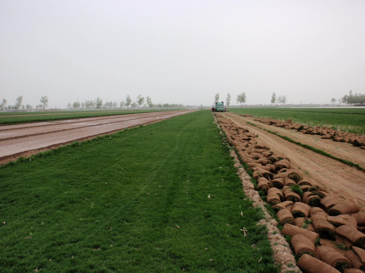 栾城怡佳草坪苗木种植基地,位于栾城县县城南2公里,308国道以东1公里,青银高速入口与草坪基地相连交通便利。我基地创建于1993年,有原县委书记郑雪碧同志,带领县委,县政府选择有利地块、肥沃的土壤建立了怡佳草坪种植基地,目前草坪基地规模已发展到6千多亩,销往内蒙古自治区、山东省、山西省,天津,等各地。 怡佳草坪基地主要生产早熟禾、高羊茅系列的优质草坪。早熟禾生产以冷季节草坪为主,主要品种有百思特、午夜2号、橄榄球、解放者、高尔夫等一批优秀的草坪品种。草坪卷完整有力无破损,经过数年的种植所用的草坪种子所生产