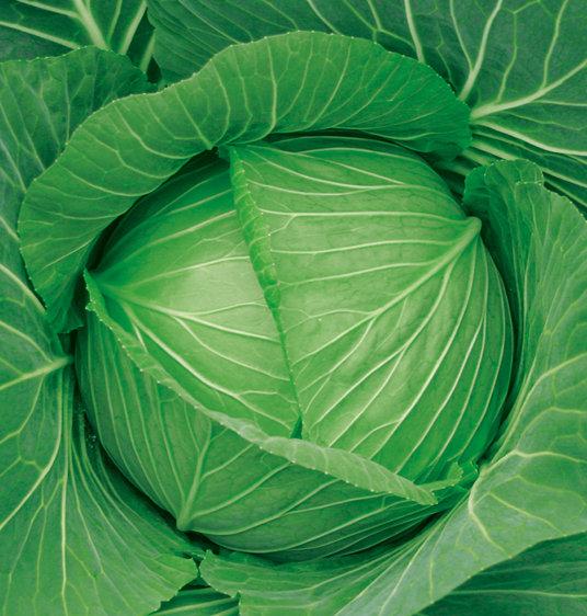 大绿抱财—甘蓝种子