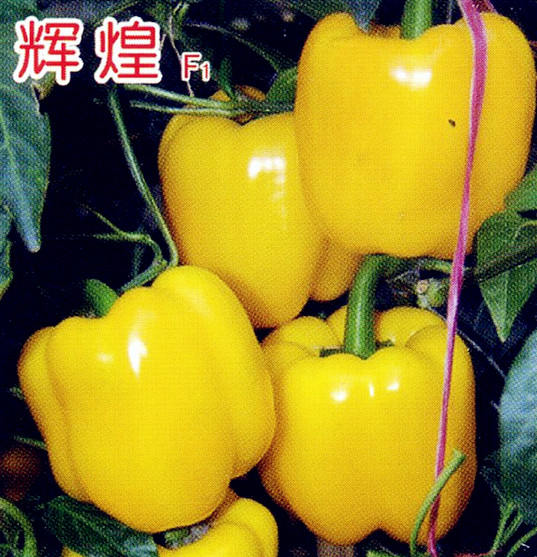輝煌-甜椒種子