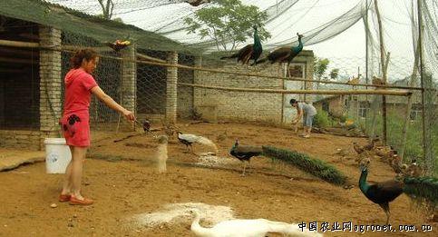 潼南野生动物园