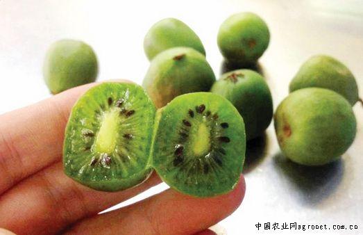 木瓜等海南水果今年均姗姗来迟