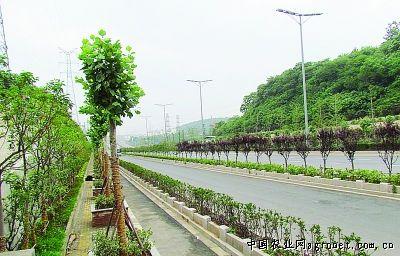 马路两边种树设计图