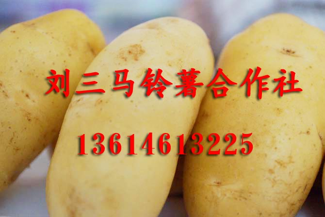 黑龍江馬鈴薯種子