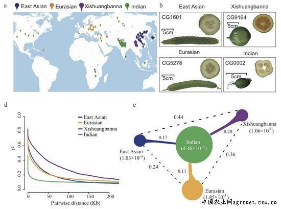 黄瓜全基因组遗传变异图谱构建完成(图)