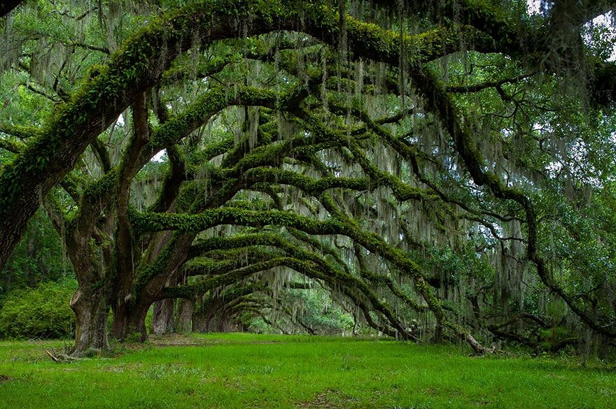你没见过的世界上16棵最美的树