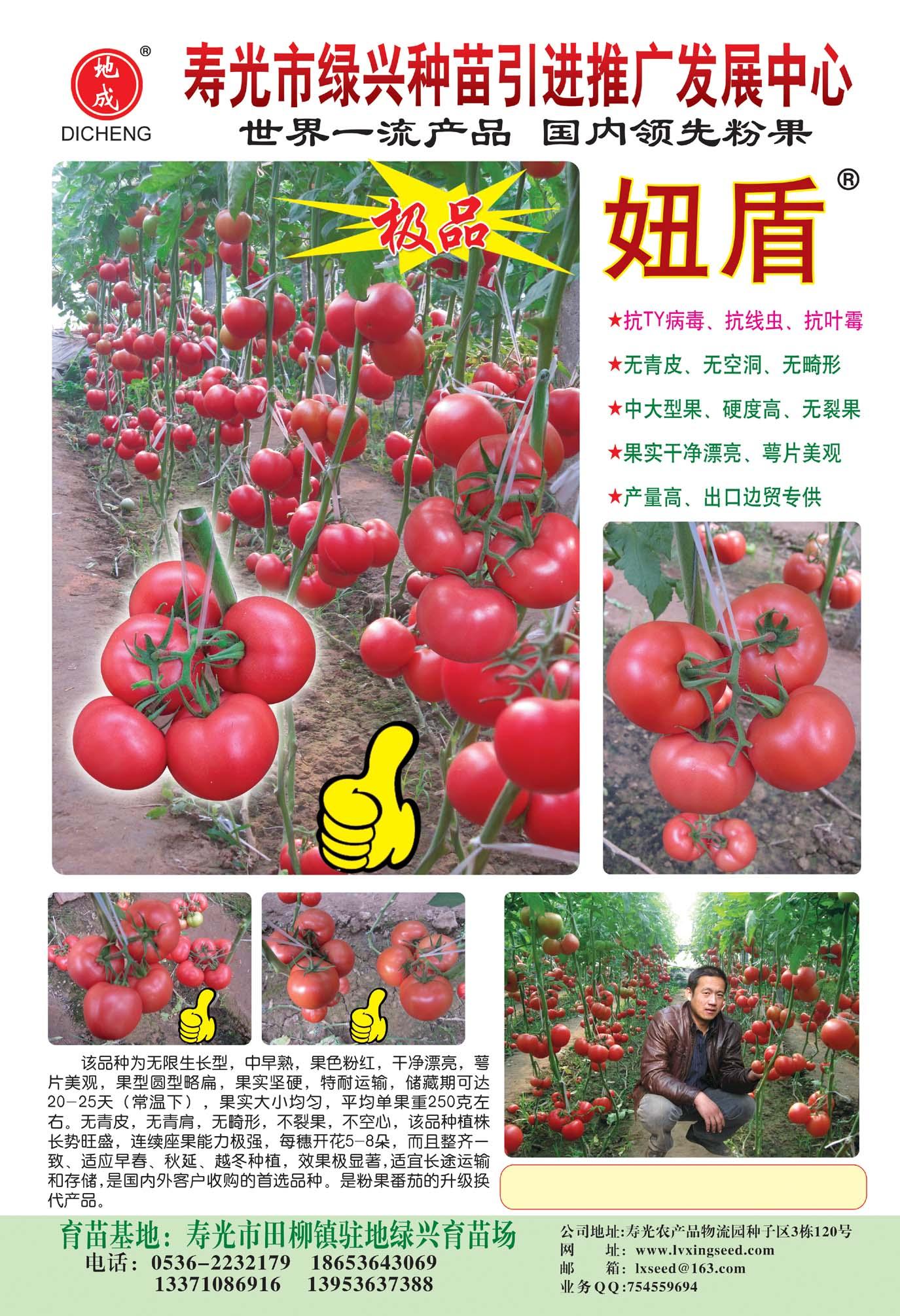 妞盾-抗Ty粉番茄种子招商