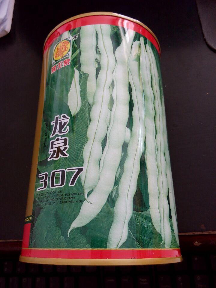 龙泉307芸豆种子