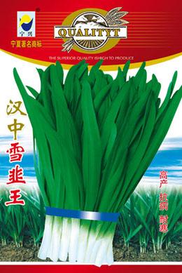 汉中雪韭王—韭菜种子