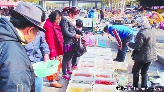近日,记者通过走访山东青岛的水产市场发现,自今年10月份以来,青岛的