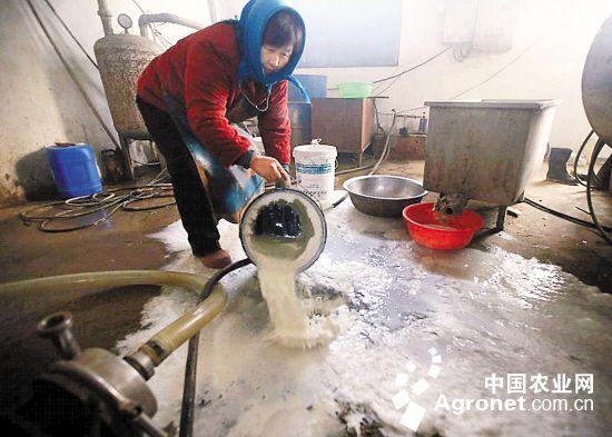 """倒奶杀牛还在持续 中国乳业""""感冒""""何时痊愈?(图)"""