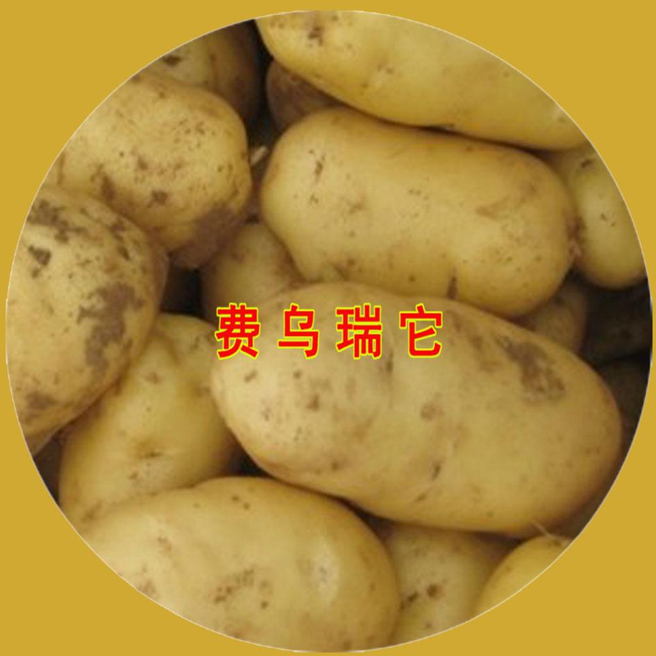 费乌瑞它—马铃薯种子