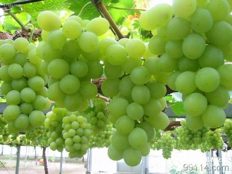 葡萄酒产区,贺兰山东麓葡萄产业文化长廊基本形成