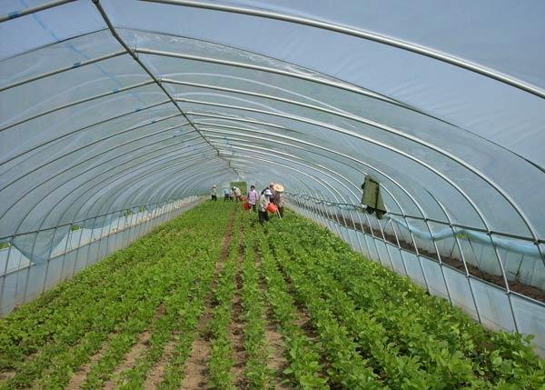 供应蔬菜温室大棚