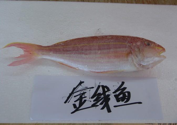 海产鱼_供应金线鱼等海产鱼