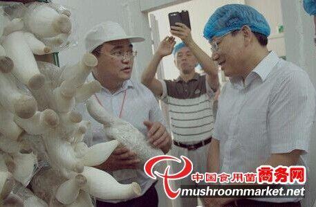 湖南:味菇坊以新型现代农业模式打造特色食用菌产业(图)
