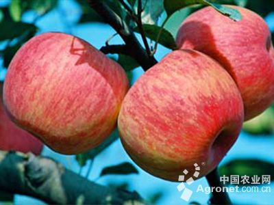 靠贩卖苹果捞得第一桶金