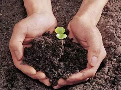 微生物肥将主导未来市场 必须掌握以下施用技术!(图)
